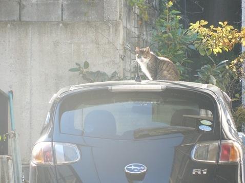 通りすがりに見かけた猫(772)