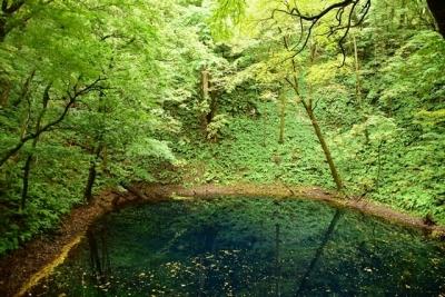 水面の落葉が金箔のよう 青池
