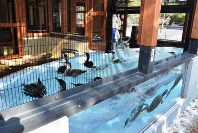 茨城産の海鵜です
