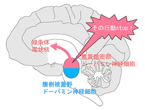 不適切な行動を抑制する脳領域