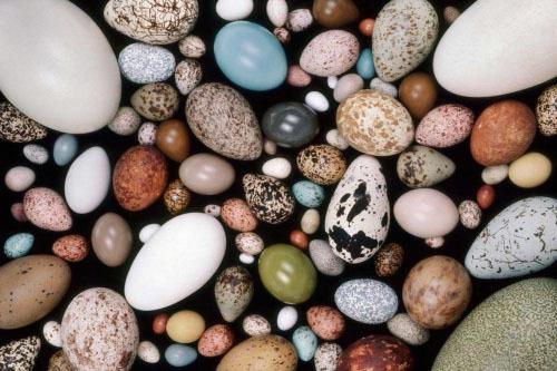 鳥の卵のカラフルさ