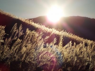 仙石原 すすき草原 2