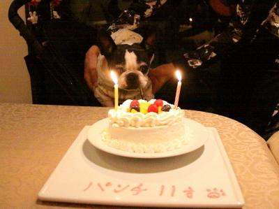 11歳 お誕生日 おめでとう