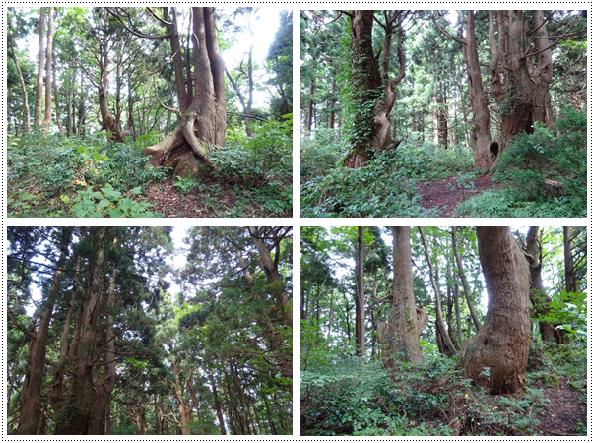 幻想の森1
