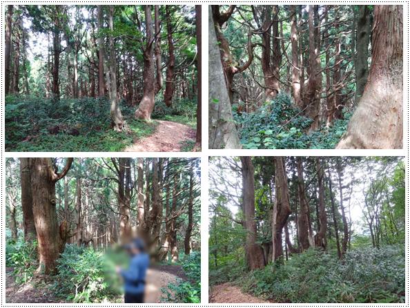 幻想の森2