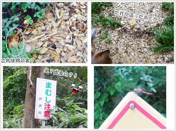 幻想の森3-2