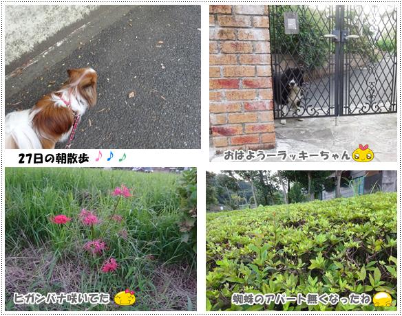 27日の朝散歩