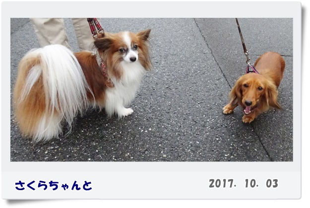 DSC01803-4-2.jpg