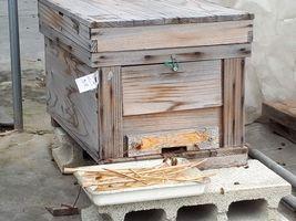 【写真】本圃ハウスに置いたミツバチの巣箱の様子