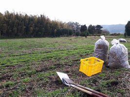 【写真】のぶ子さんの大豆畑の様子