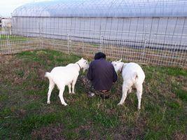 【写真】農園主の手元を両脇からのぞき込むアラン(右)とポール(左)