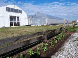 【写真】受付ハウス前の花壇に植えたキンセンカ