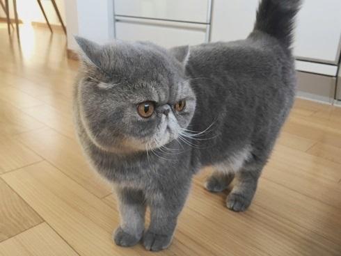 34)猫又って言ってた
