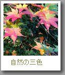自然の三色