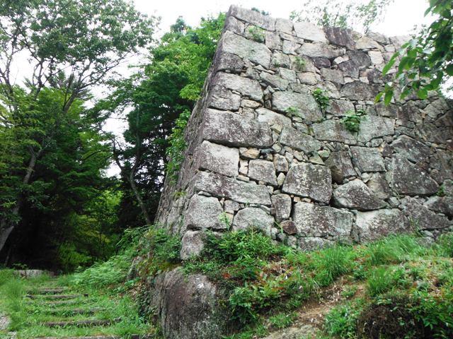 苗木城 (202)