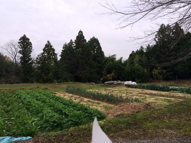 松尾城 (36)