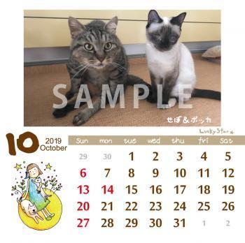 takujyo_sample_B_convert_20181019185832.jpg