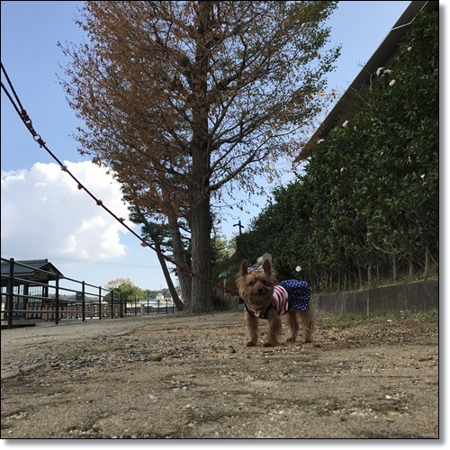 舘山寺IMG_6788-20181020
