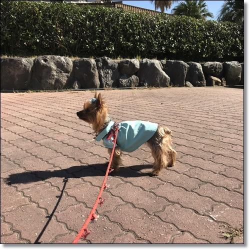 浜名湖レイクサイドと秋桜の径IMG_6801-20181021