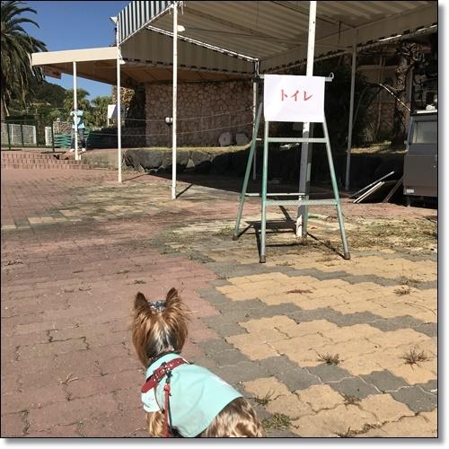 浜名湖レイクサイドと秋桜の径IMG_6802-20181021