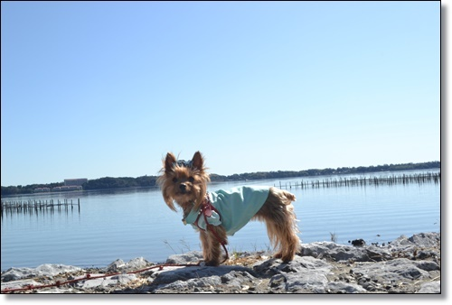 浜名湖レイクサイドと秋桜の径DSC_0417-20181021