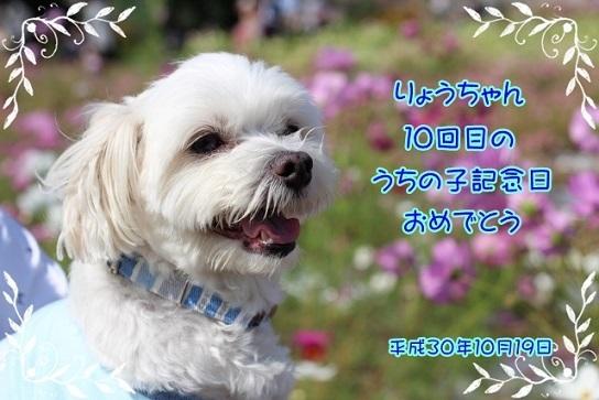 IMG_5264 (640x427)
