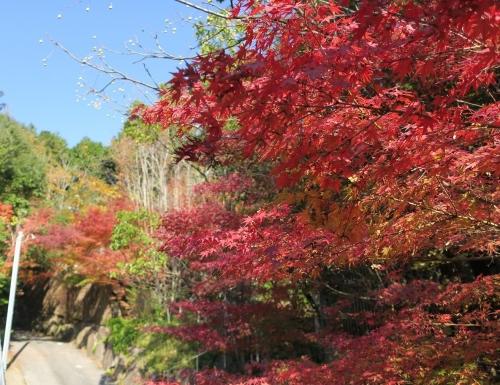 風の森紅葉