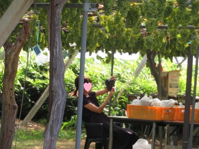 葡萄の選別作業