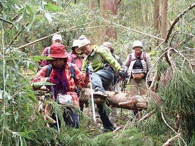6倒木と竹