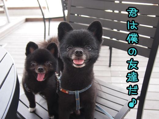kimihabokunotomodachida.jpg