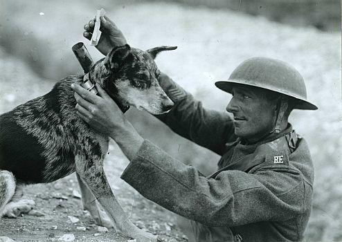 animals-war-exhibition.jpg