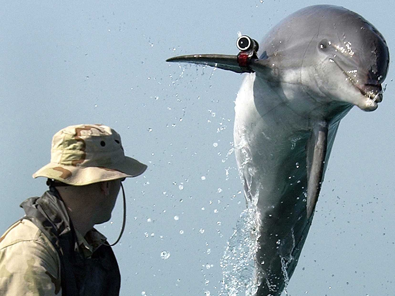 military-dolphins-help-defend-the-worlds-largest-stockpile-of-nuclear-weapons.jpg