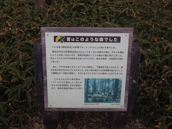 PA139476.jpg