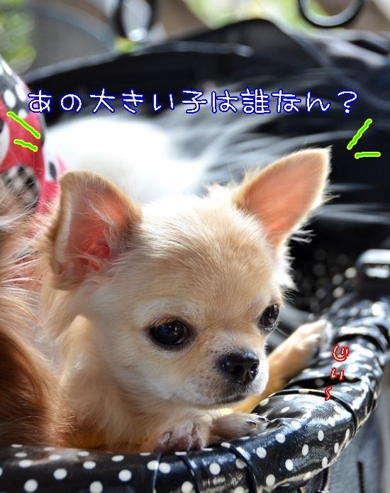 DSC_4383.jpg