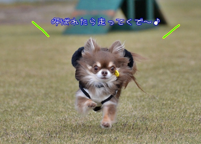 DSC_5989_20171213191454613.jpg