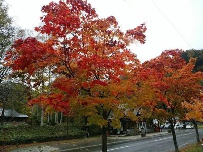 湯元温泉の紅葉