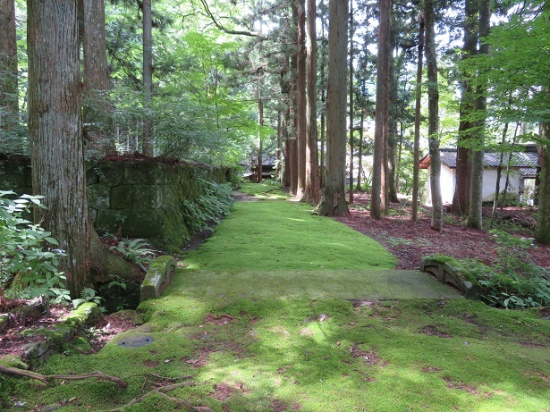 光前寺の苔