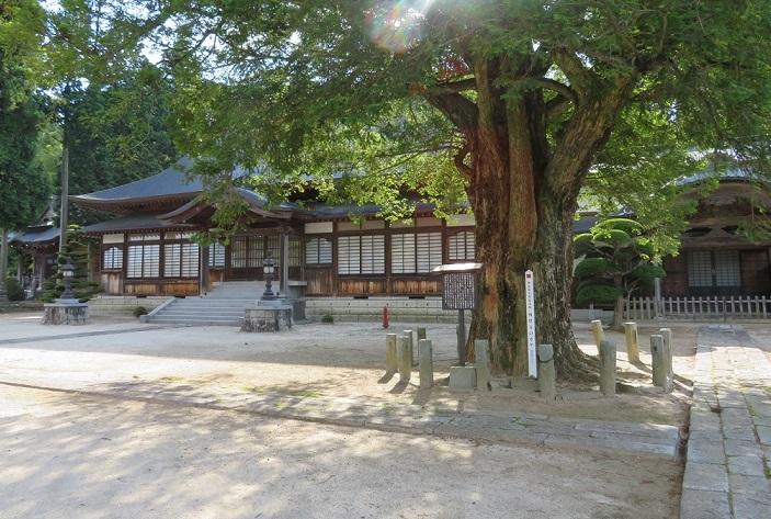 西岸寺 本堂とカヤ