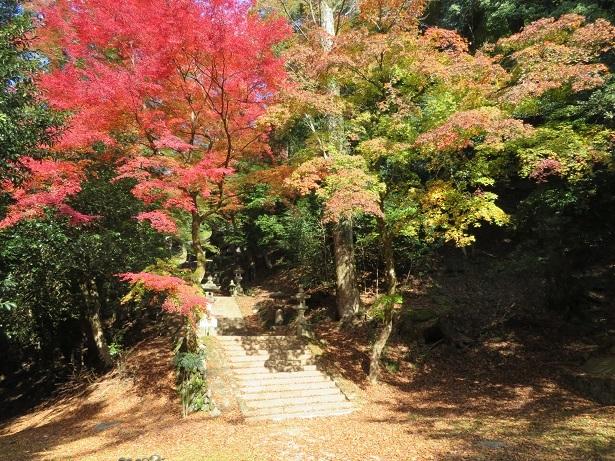 諏訪神社 紅葉
