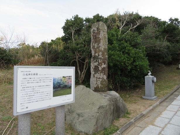 白兎神社樹叢