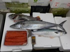 8鮮魚セット20171020
