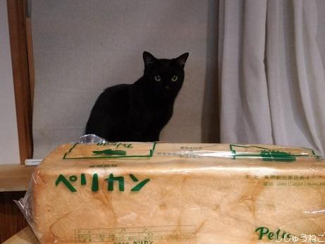 ペリカンのパンと黒猫