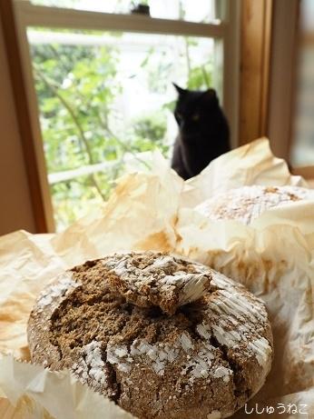 失敗ライ麦パンと黒猫
