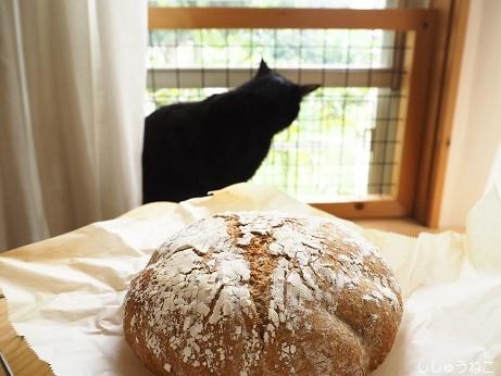 パンと黒猫