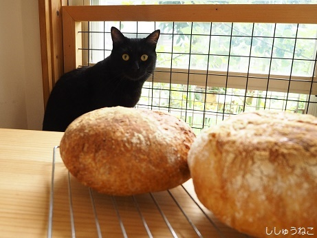 Jkとパン