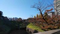 昭和館2階ひろばから見た靖国通りの銀杏並木