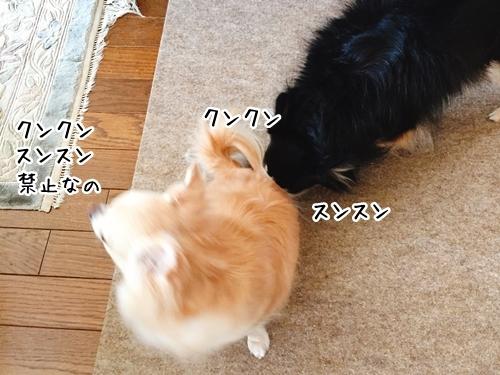 IMG_9503-1.jpg