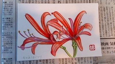 DSC_84410.jpg