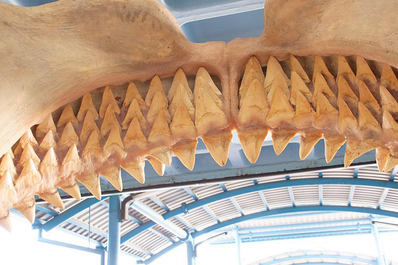 サメ歯IMG_5177