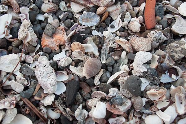 貝殻sIMG_5453